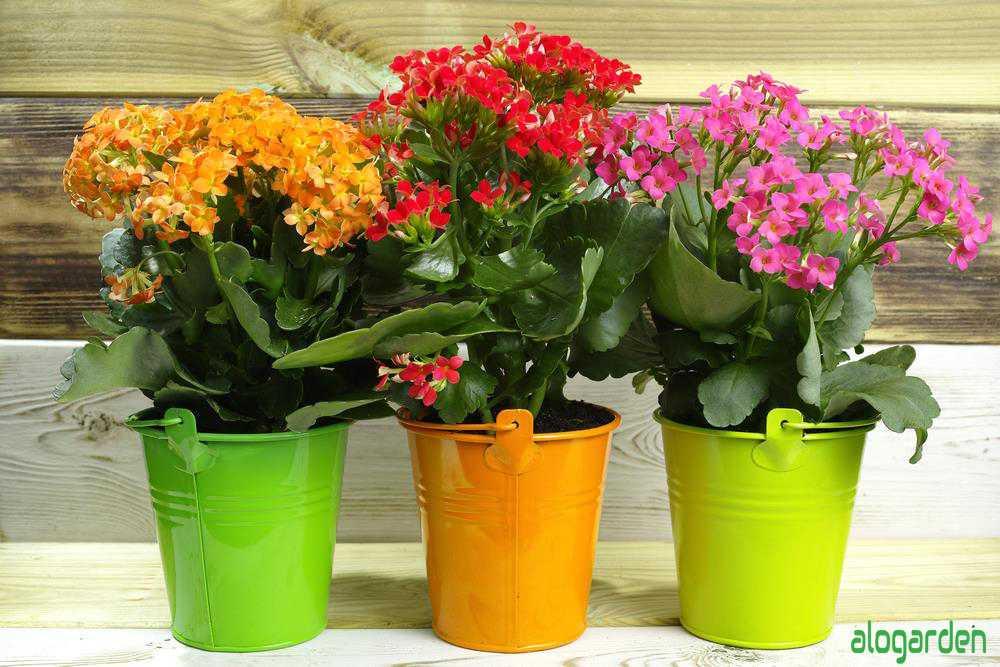 Chậu hoa sống đời nhiều màu sắc