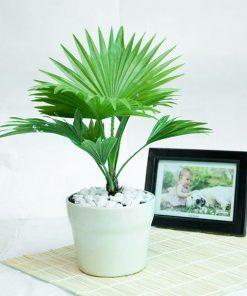 cây cọ để bàn giúp thanh lọc không khí