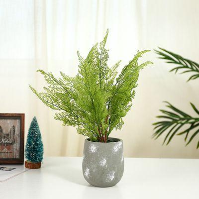cây dương xỉ mini để bàn